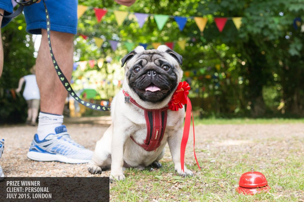 Henry the dog - prize winner at the Quality Street Fair Merstham Surrey photography copyright Paul Clarke
