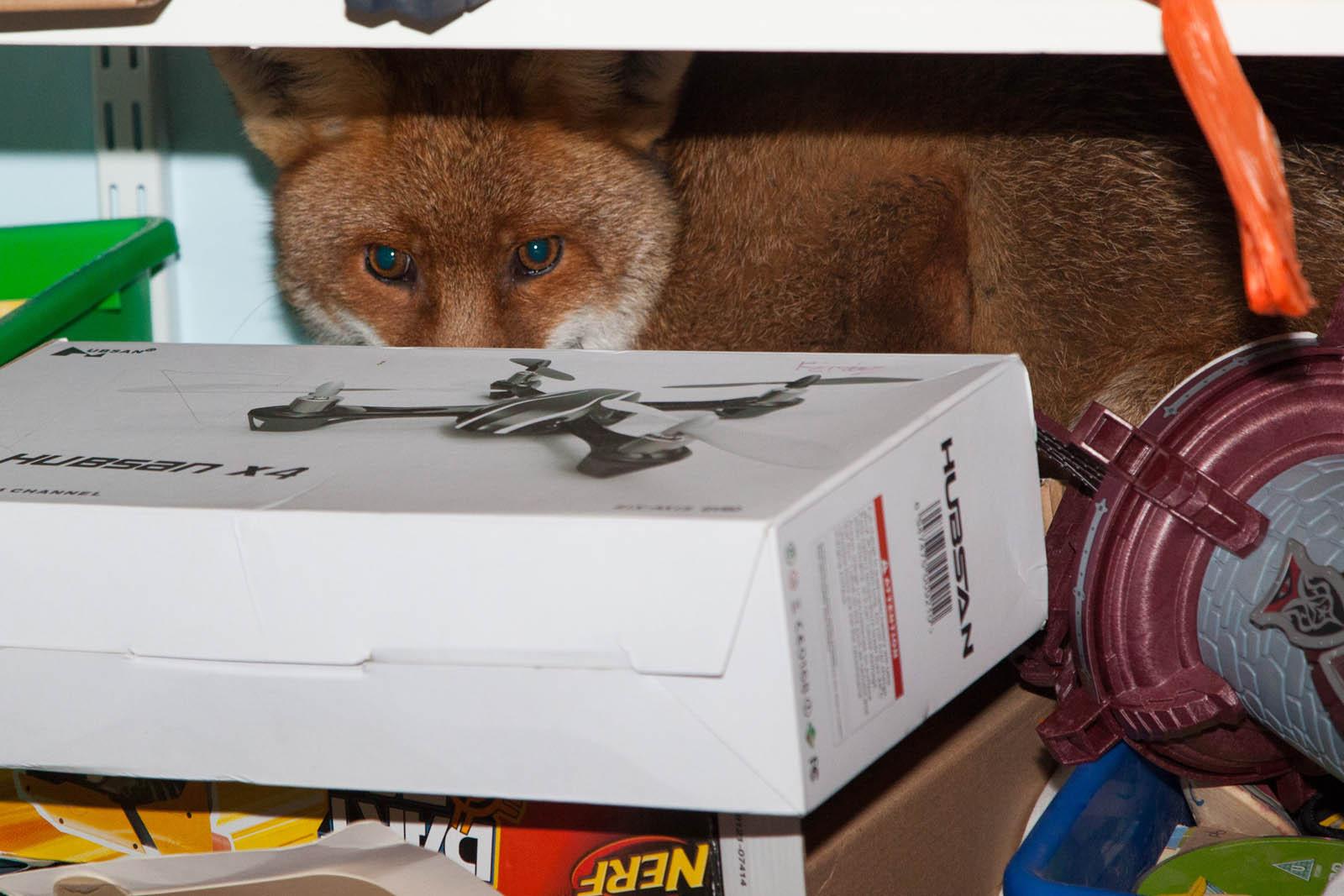 01 jan fox