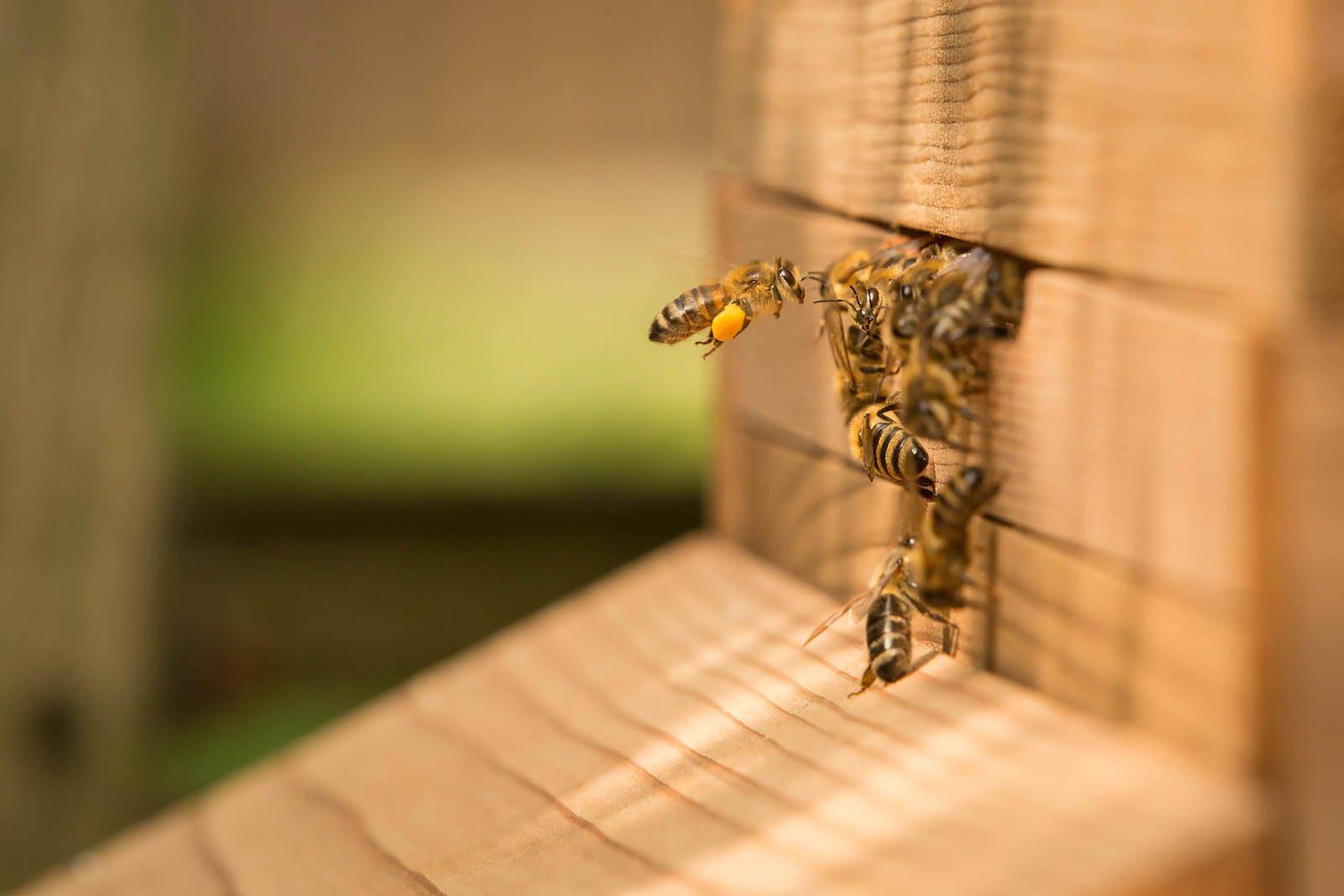 11 may bees