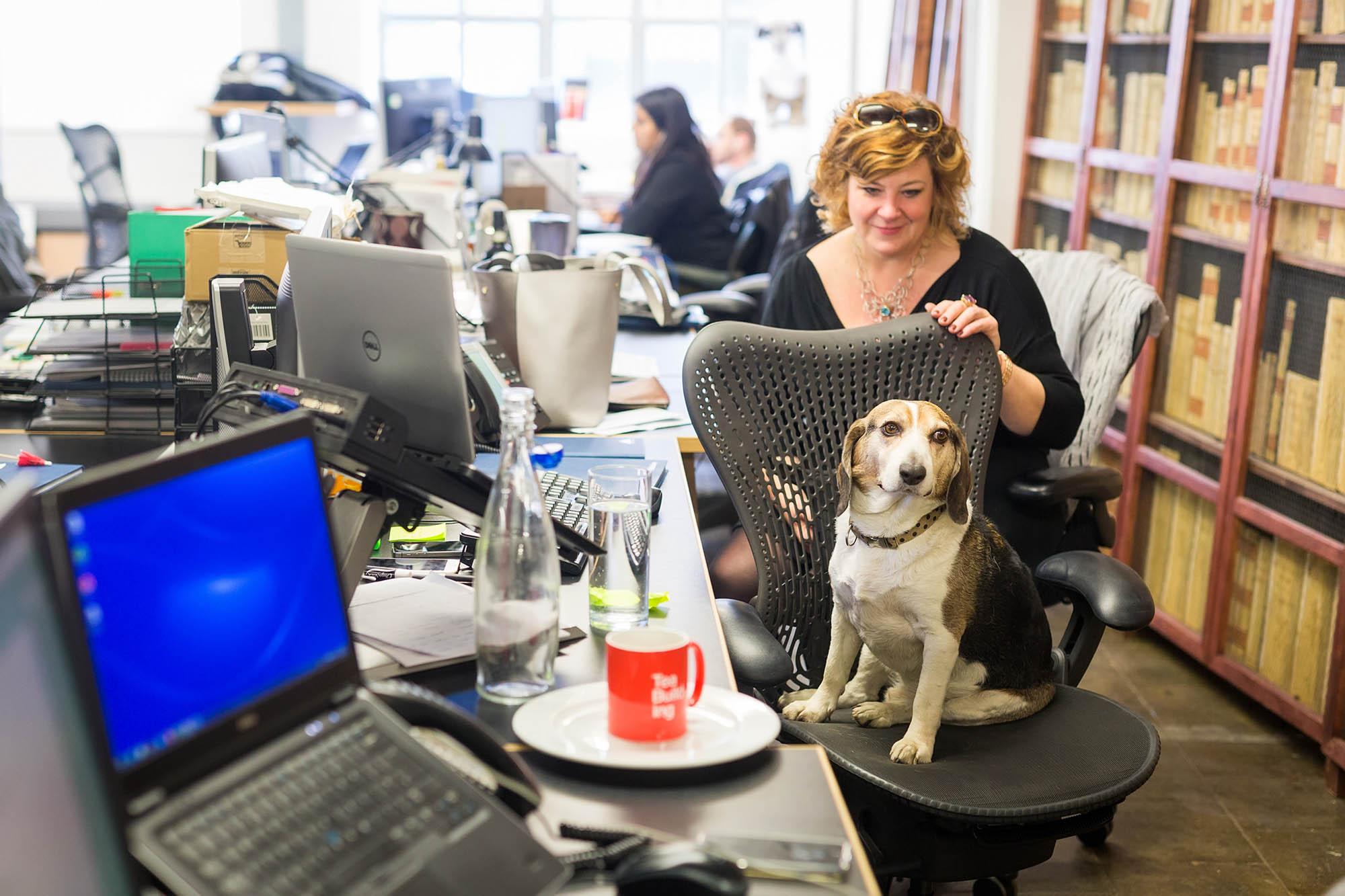 05 Office dog